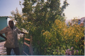 George & his peach tree. Photo courtesy of Salma Hasan Ali.