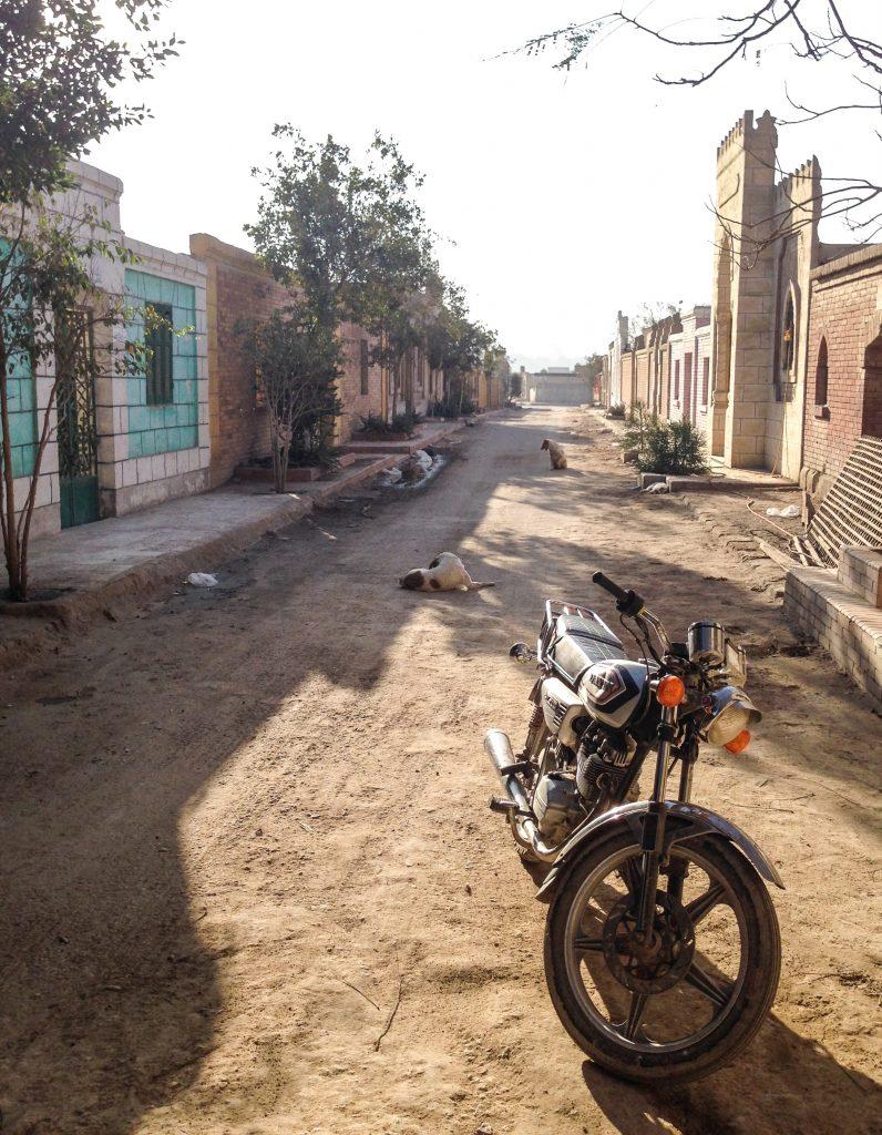 Street_dogs_motorbike