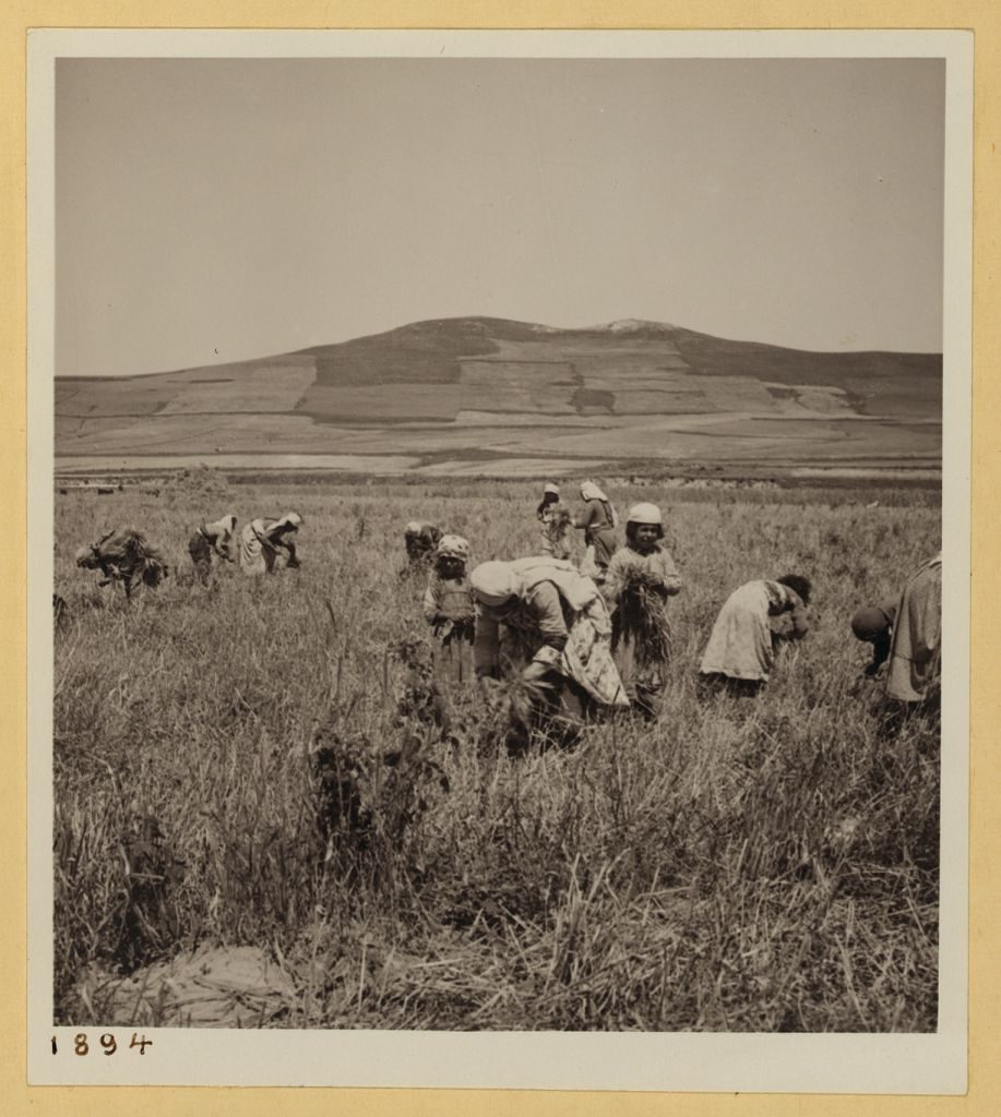 Alawite women and children in the fields in Syria in 1938. >Library of Congress, Prints & Photographs Division, [LC-DIG-ppmsca-17414-00190]
